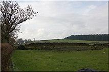 NZ0367 : Chimney Shildonhill by P Glenwright