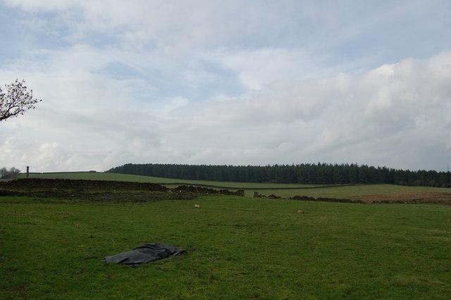 Forestry plantation Shildonhill