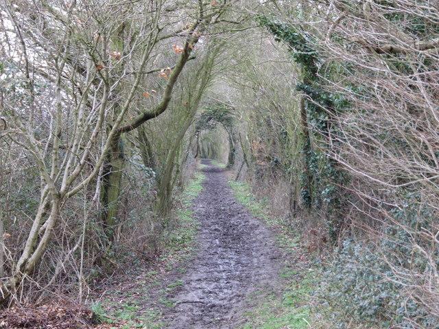 Footpath to Wattlefield