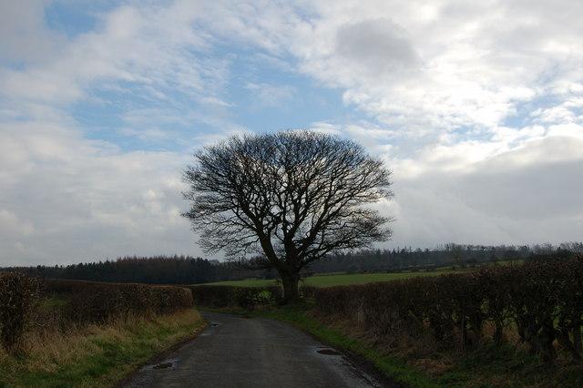 Tree on Cut Throat Lane