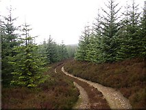 NN8544 : Winding forest track by Lis Burke