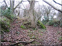 SJ1469 : Ancient Trackway by John S Turner