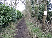 SU6778 : Bridleway at Cross Lanes by Graham Horn