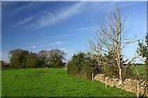 SP2604 : Field near Alvescot by Martin Loader