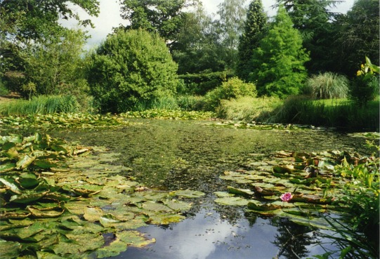 The pond at Furzey Gardens