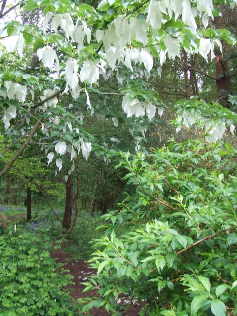 Prince Charles' Spinney, Richmond Park