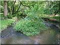 SS5417 : Wooleigh Brook, Devon by Dr Duncan Pepper