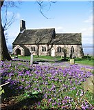 SD4161 : Crocuses at St. Peter's church by Ian Taylor