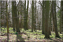 SP4121 : Hill Wood by Martin Loader