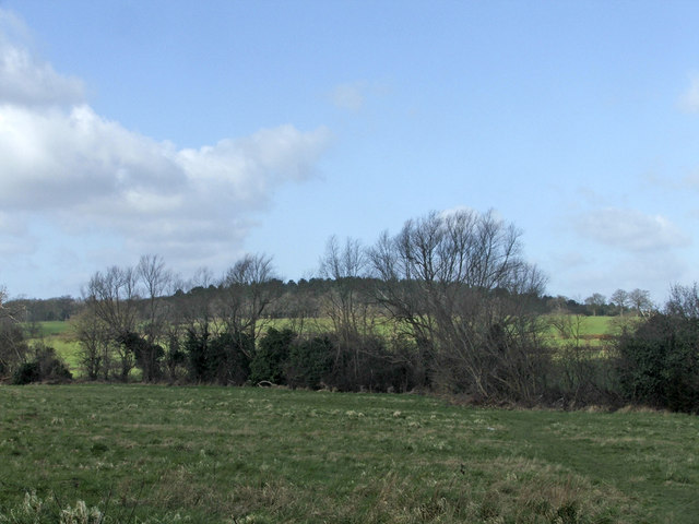 Hog Hill taken from field at end of Trentwood, Enfield by Christine Matthews