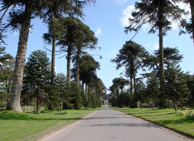 Tree lined Drive at Bicton College
