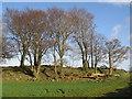 NS3962 : Trees by wfmillar