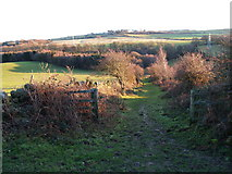 NZ0658 : Byway from Apperley Fell to Kipperlyn by Clive Nicholson