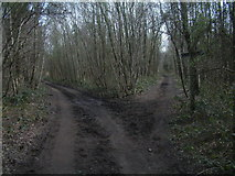TQ2253 : Bridleway Junction On Walton Heath by John Hilton