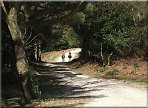 SU2609 : Horse Riding Near Acres Down. by Gillian Thomas