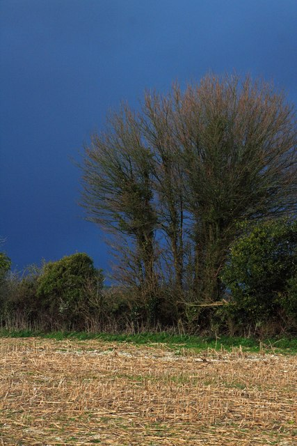 Hedgerow before hail storm