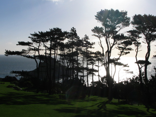 Thatcher Point: silhouette of pine trees