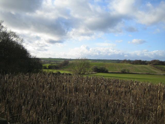 Valley near Cuddington
