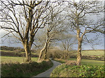 SW7433 : Lane and trees at Halvasso by Jonathan Billinger