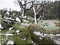 NY2029 : Rocky Knoll, Near Lothwaite Side by Mick Garratt