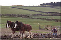 NY8161 : Farmer ploughing with horses by Mike Quinn