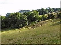 SK2753 : Sprink Wood & Rough Pitty Side by Nigel Judd
