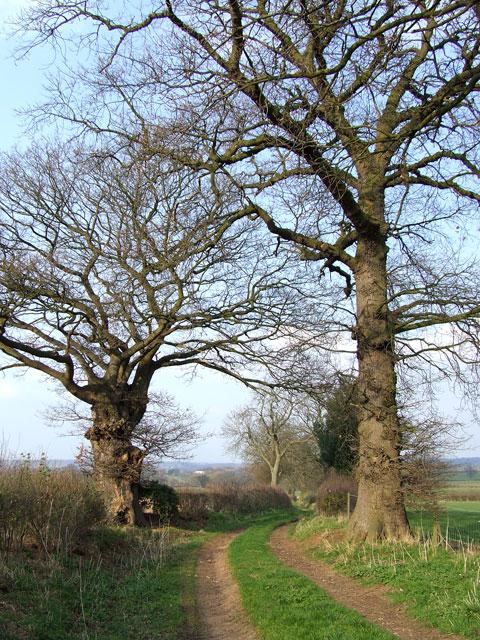 Public Footpath, near Four Ashes, Staffordshire