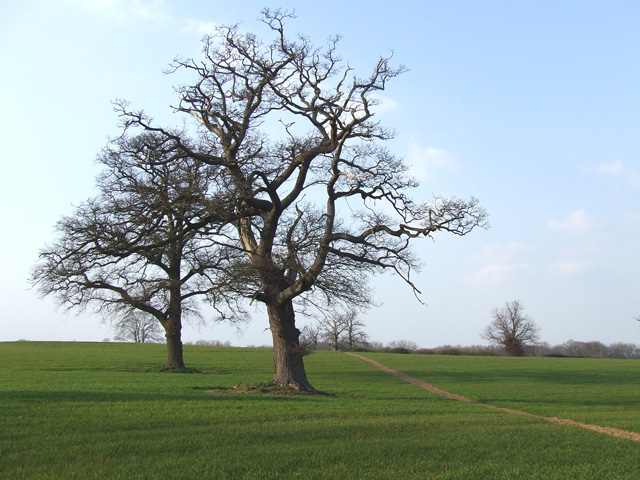 Footpath across Fields, Four Ashes, Staffordshire