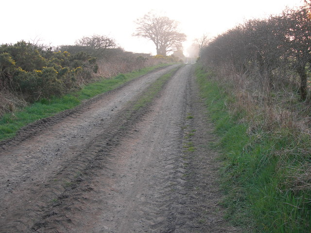 Farm road from Gallows Law to Hillend