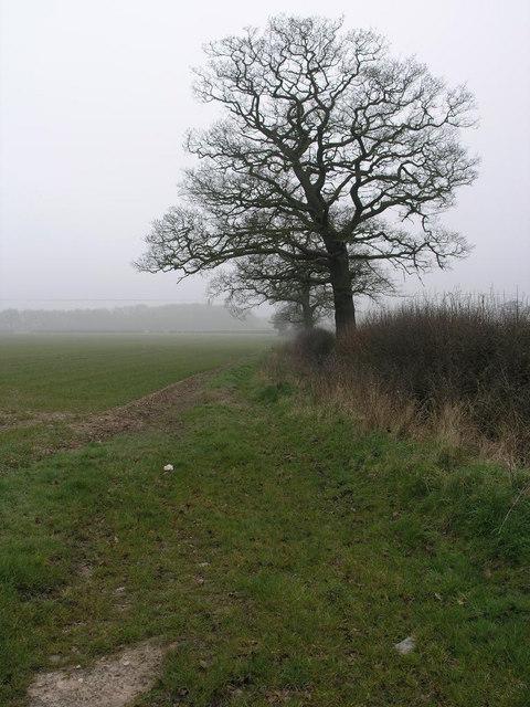Big Tree and Mist