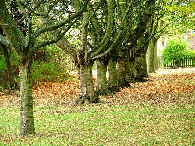 Urban Woodland, School Aycliffe