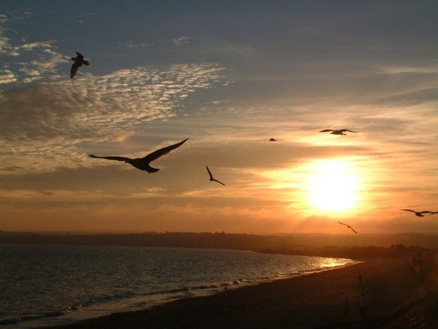 Seagulls at Long Rock, Penzance