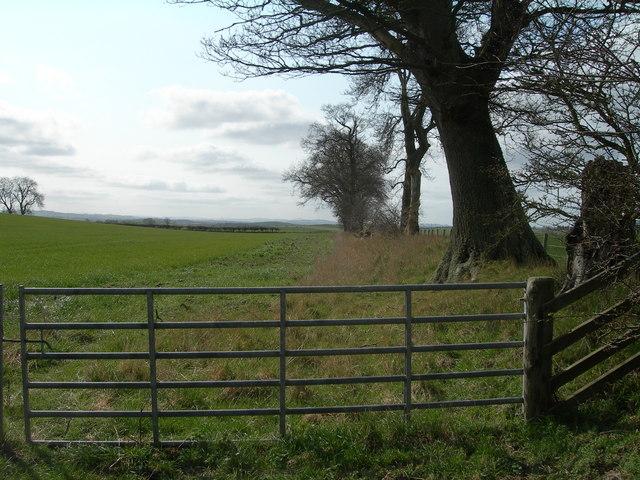 Farmland and trees near Eccles