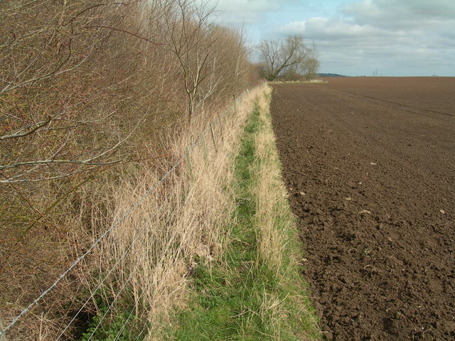 Ploughed field and plantation edge near Eccles