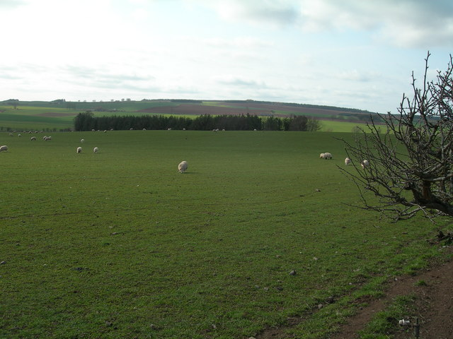 Farmland and plantation near Frogden