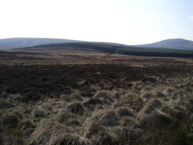 Grouse Moor at Hare Law Burn