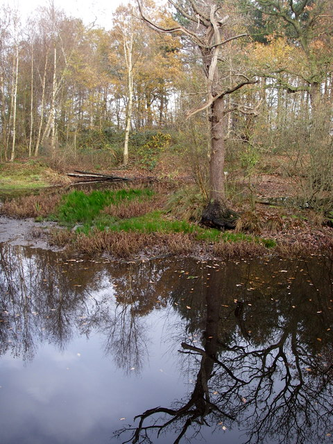Coneyfield wood pond