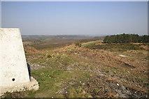SY8086 : Blacknoll Hill Trig Point, Winfrith Heath by Stuart Cankett