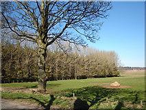 NO3249 : Woodland near Baikie Sawmill by Sylvia Barrow