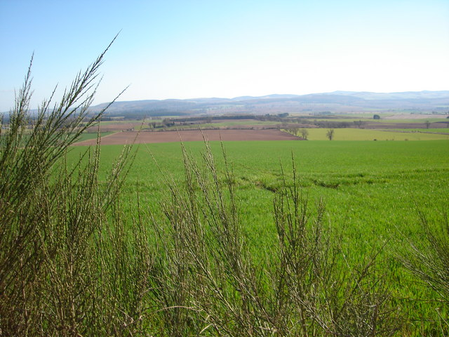 Pasture Land between Kinalty and Reedie