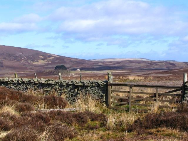 Gate to Kippet Law