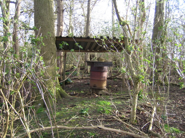 Curiosity in woods near Cuddington