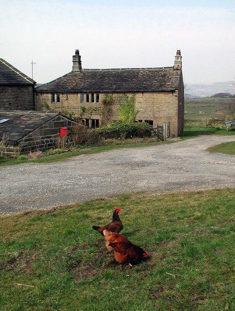 Cock Hill Farm