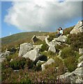 S8251 : South Spur Mt Leinster by Andrew Lloyd