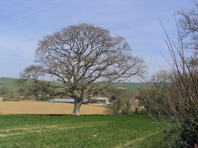Silverbridge Farm from Carter's Lane