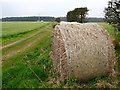 NU0739 : Mast at Fenwick Wood by Lisa Jarvis