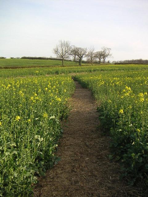 Countryside Public Footpath