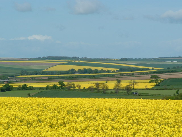 Rape Fields north of Kilham