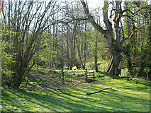 SO7481 : Path to brook by Neil Owen