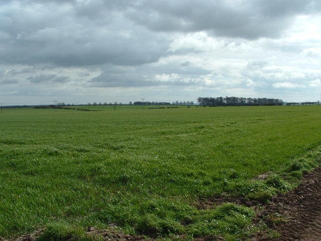 Arable land near Sycamore Tree farm, Hunmanby